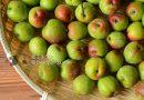 蜂蜜梅酒 Q & A  How to make Fermented Green Plum Wine (Umeshu)