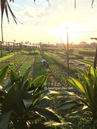 越南飲食記 (下)【蜆港、芹苴】Vietnam Restaurant Review II